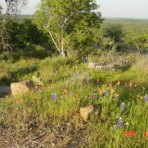 Texas Hill Country and Wildflowers